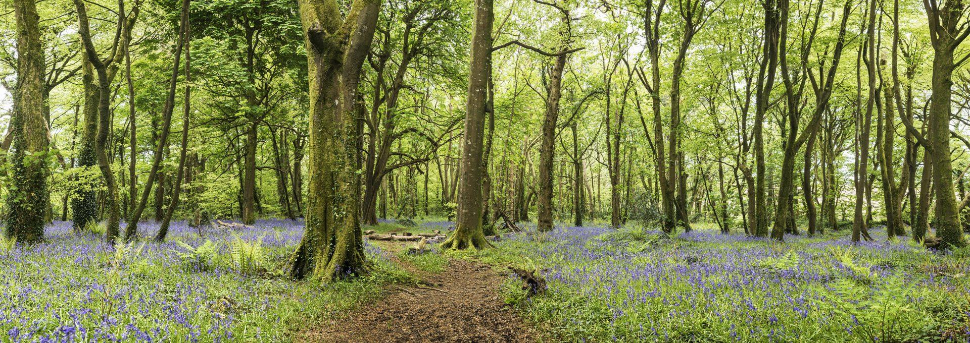 Pendarves Woods
