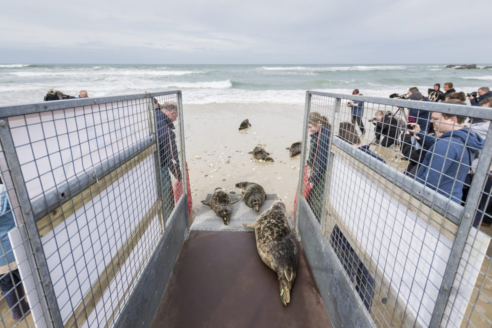 Grey Seal Conservation