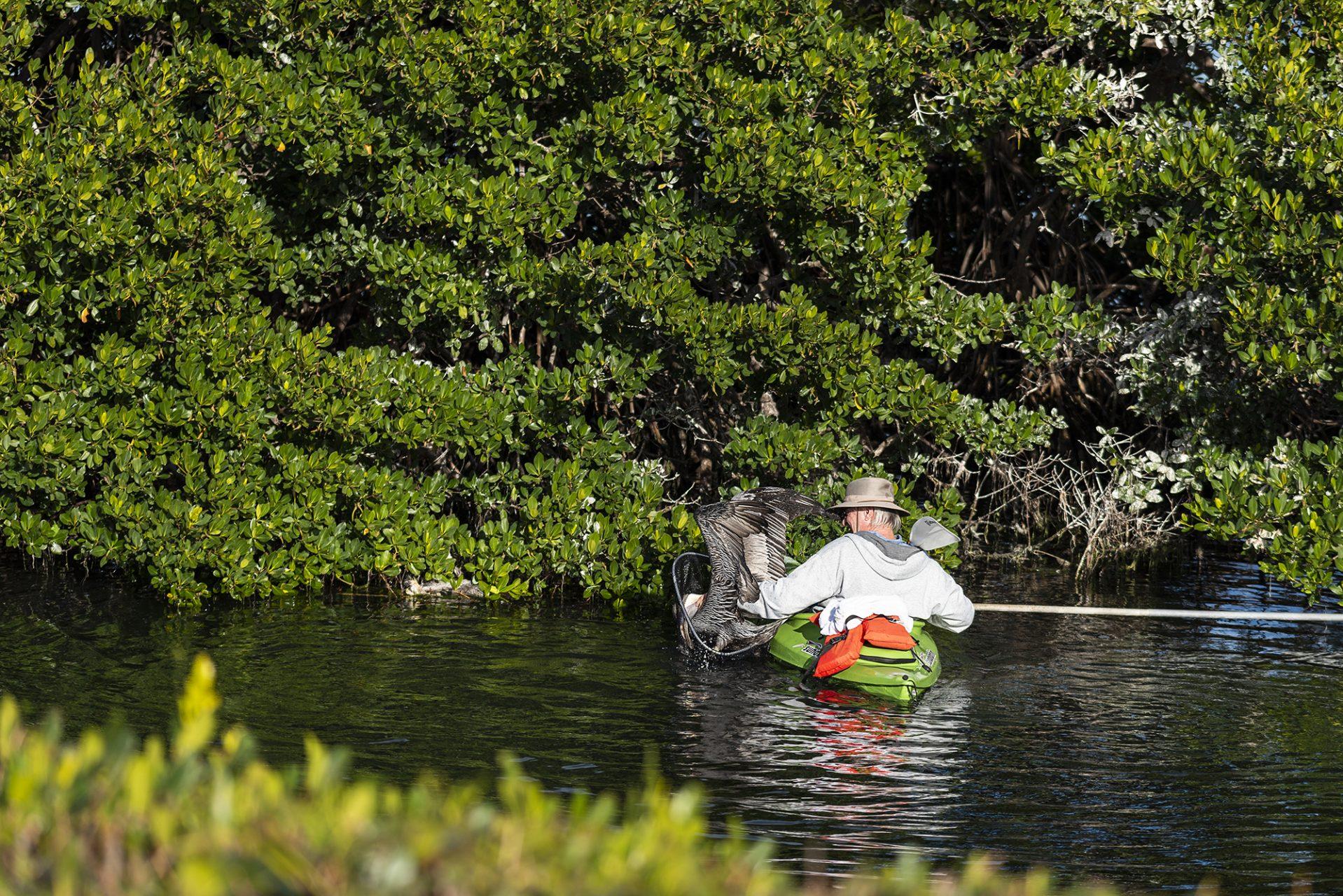 Rescuing Pelican