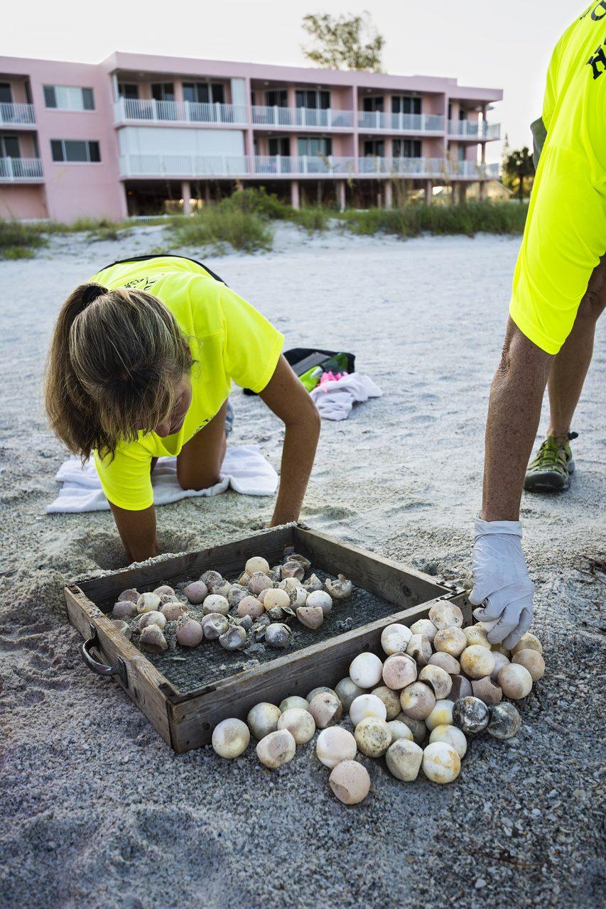 Excavating a Storm Damaged Nest