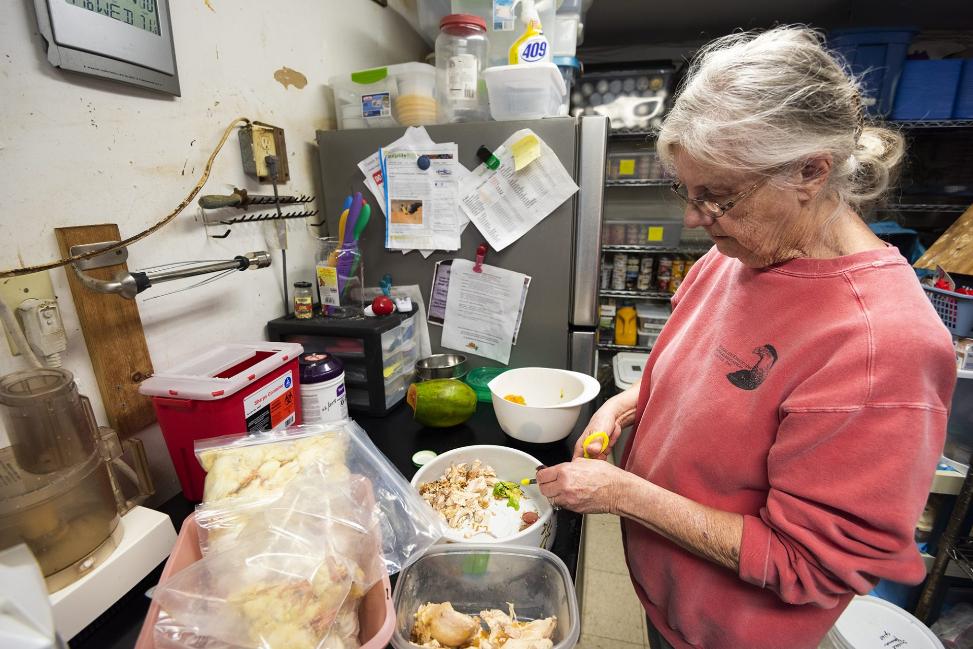 Gail Preparing Skunk Food