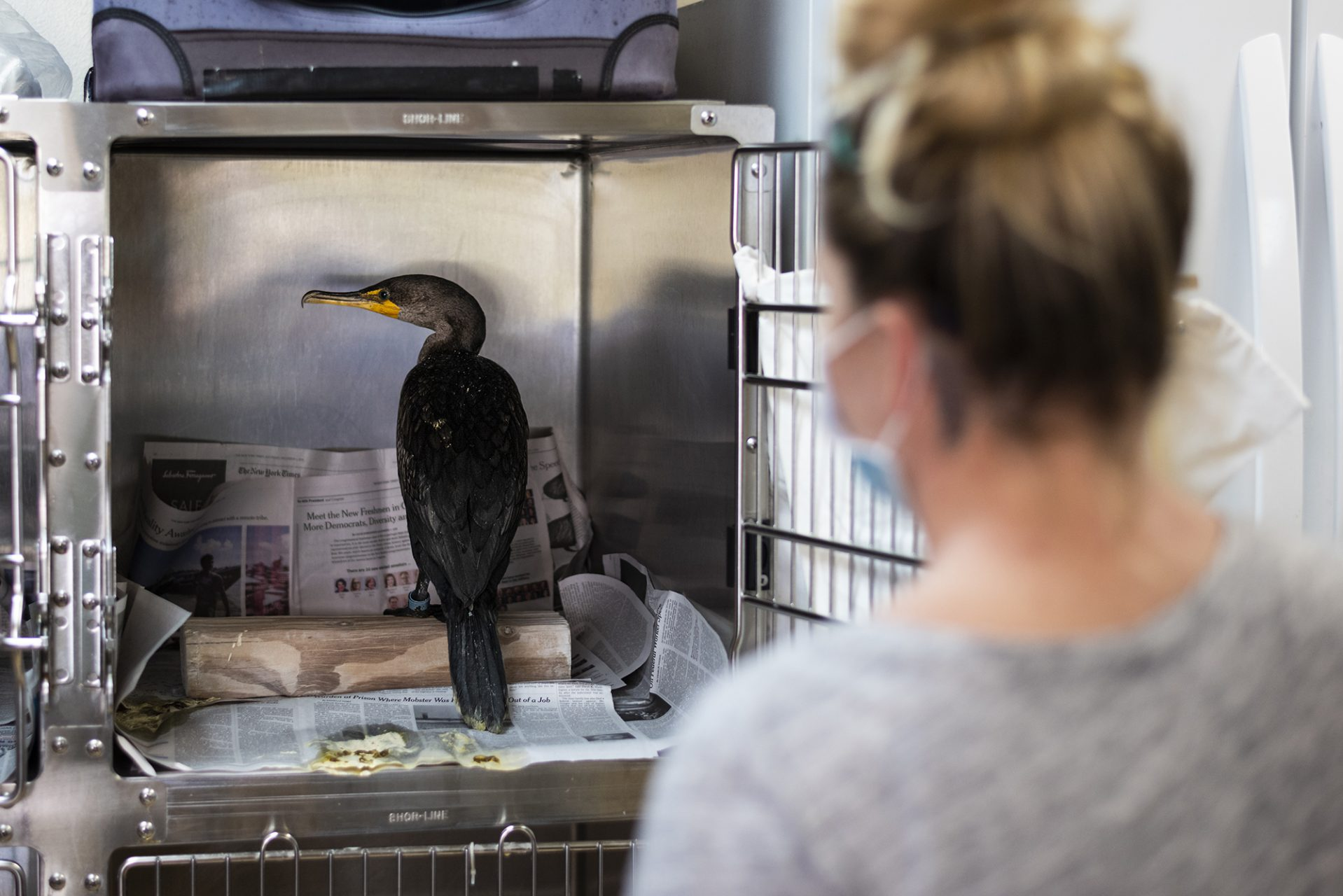 Monitoring Cormorant Poisoned by Red Tide